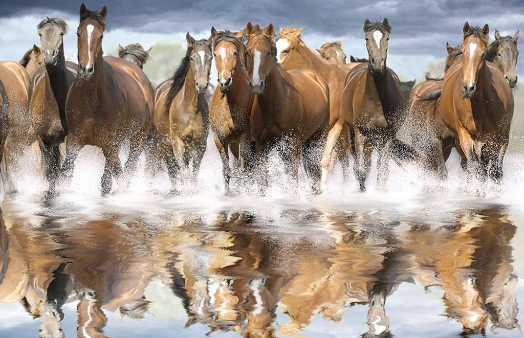 Beautiful Wallpapers wild horses wallpapers 1024x661