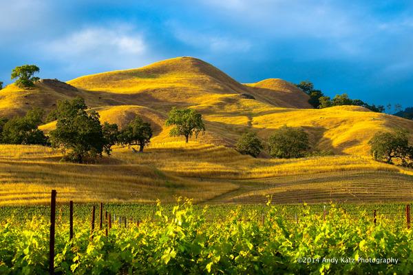 wine country desktop wallpaper