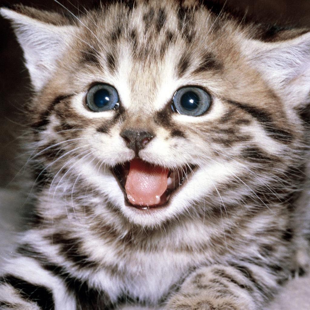 Kitten iPad Wallpaper   Download iPad wallpapers backgrounds 1024x1024