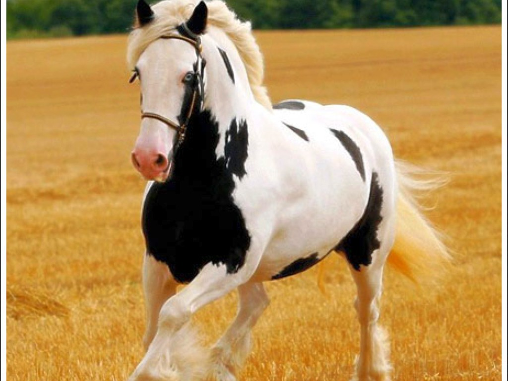 Horse Wallpapers Screensavers HD wallpaper background 1024x768