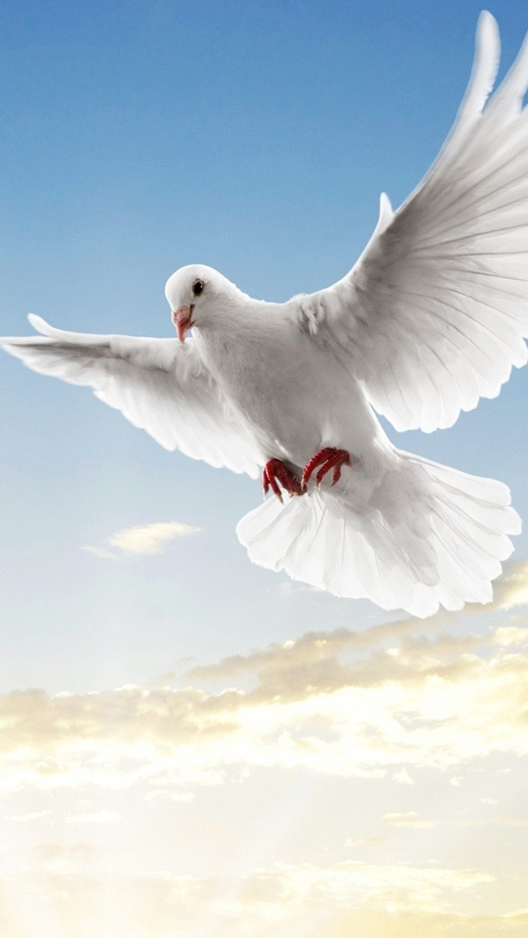 Captivating Animal White Dove Flying Under Blue Sky Widescreen