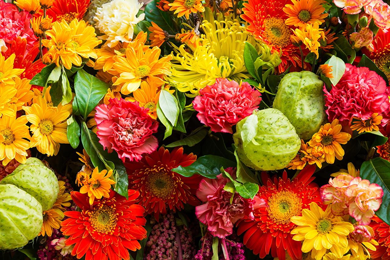 Images gerbera Mums flower dianthus 1280x854