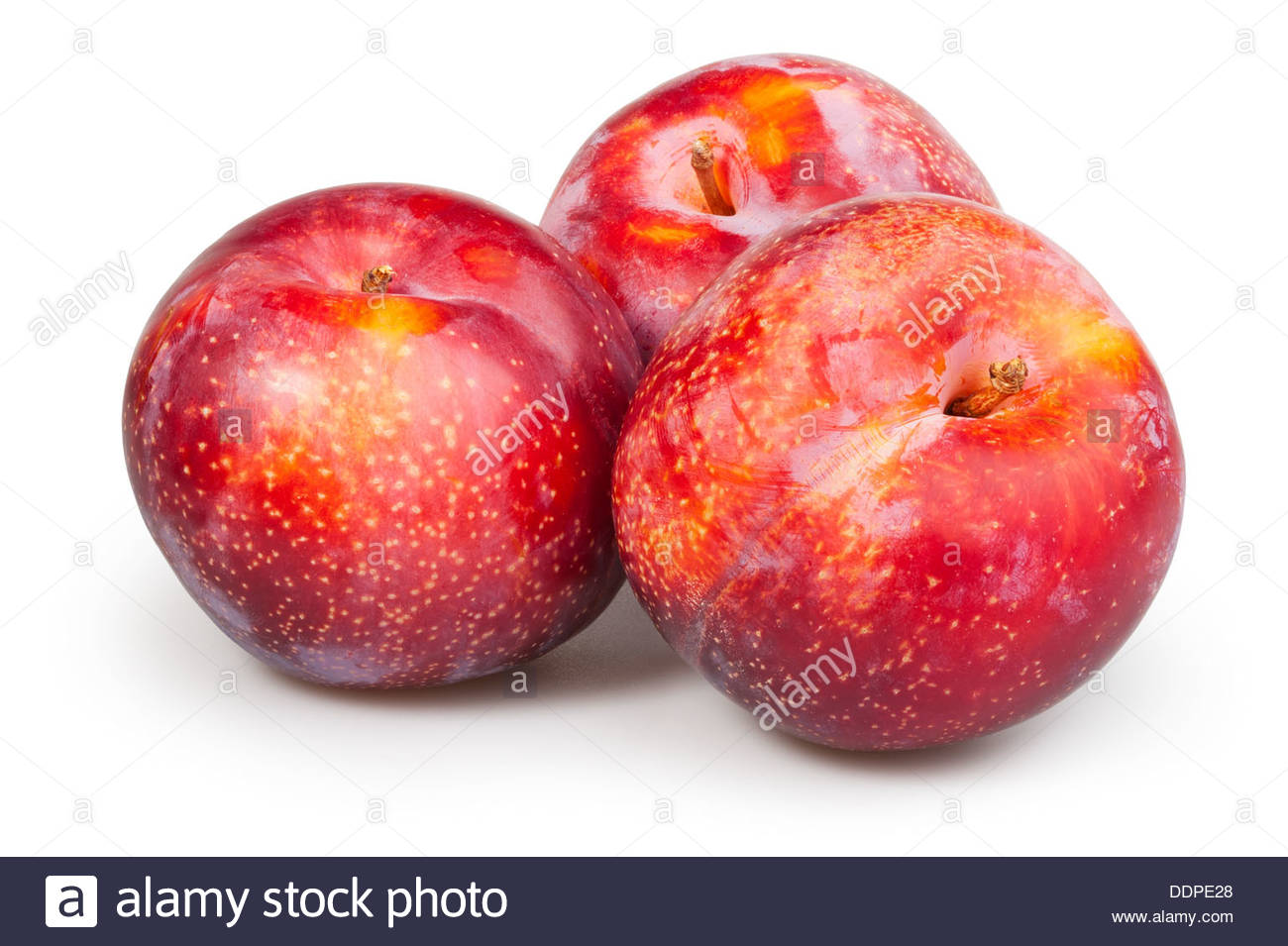 plum red group on white background Stock Photo 60115616   Alamy 1300x955