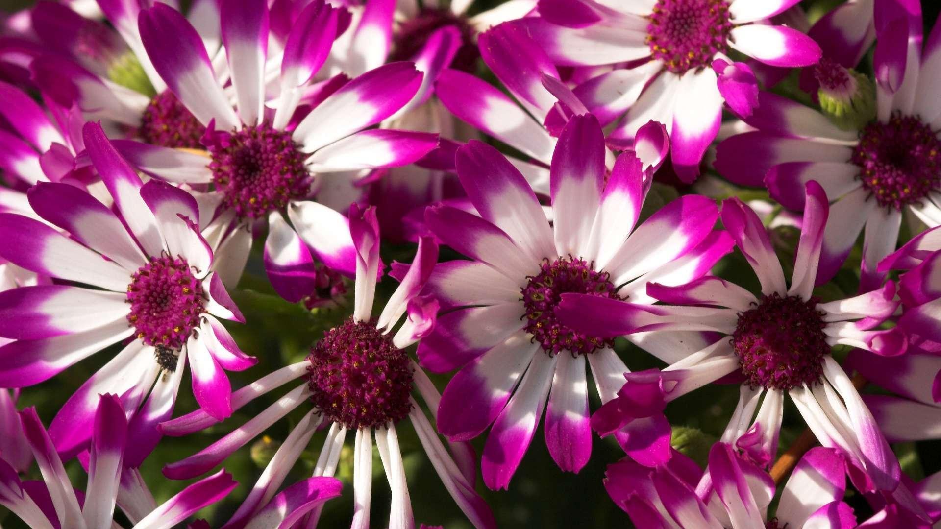 Beautiful Purple Flowers HD Wallpaper 1080p HDWallWide 1920x1080