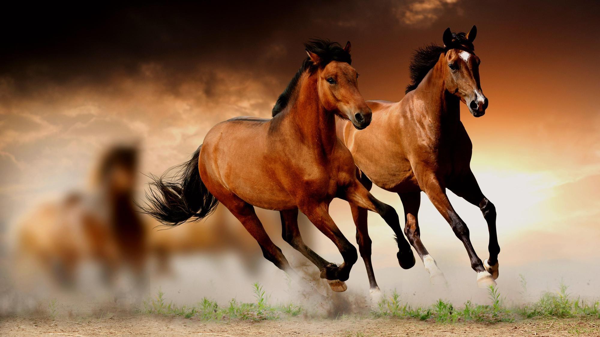 Horse Wallpapers HD Download Horses Horses Horse wallpaper 2000x1125