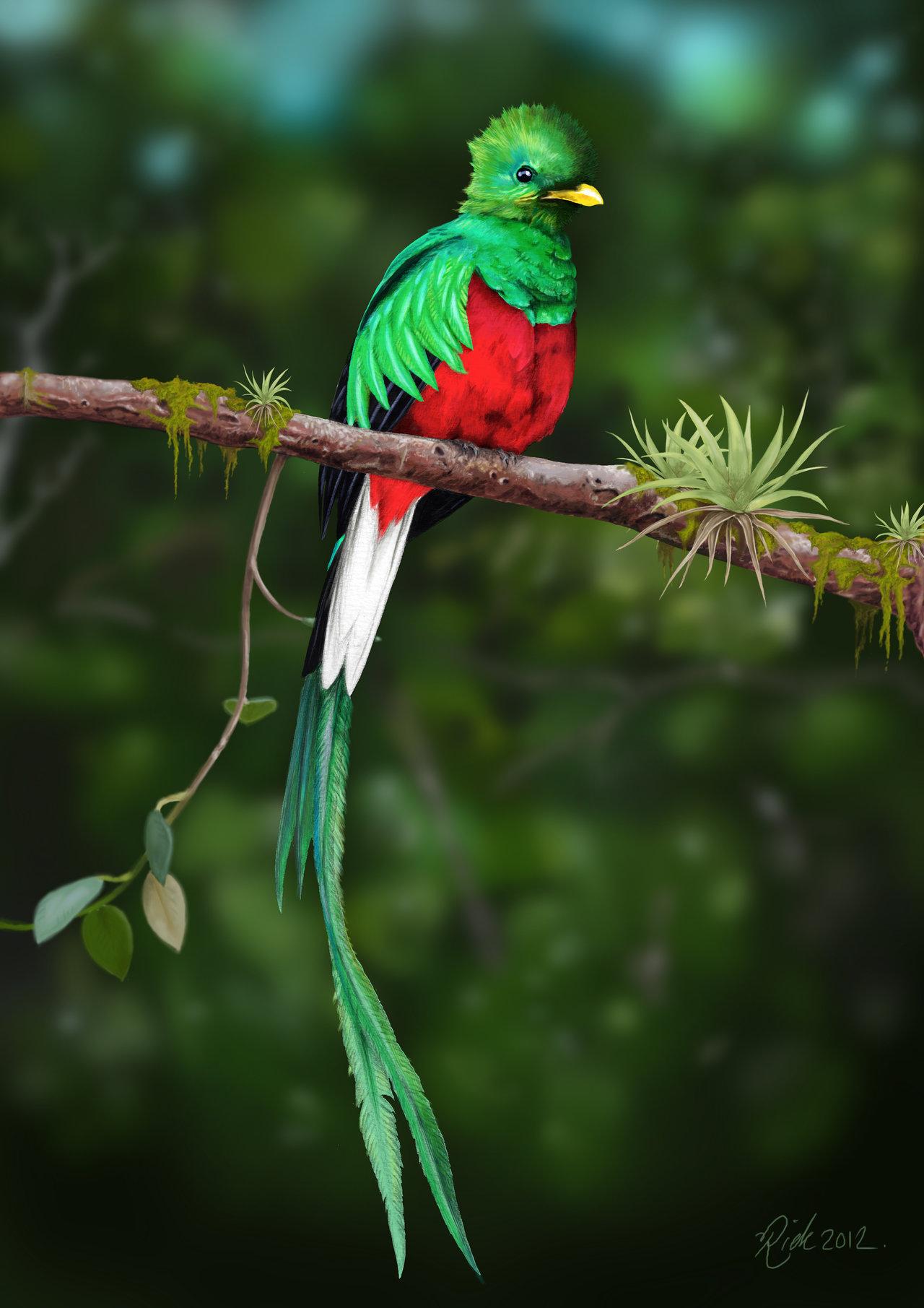 Quetzal Beautiful Quetzal 10056 1280x1811