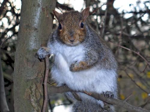 Screensavers And Wallpaper Squirrels Wallpapersafari