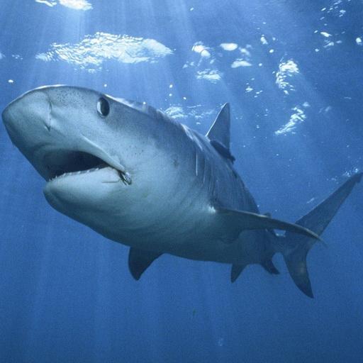 49+ Shark Live Wallpaper on WallpaperSafari