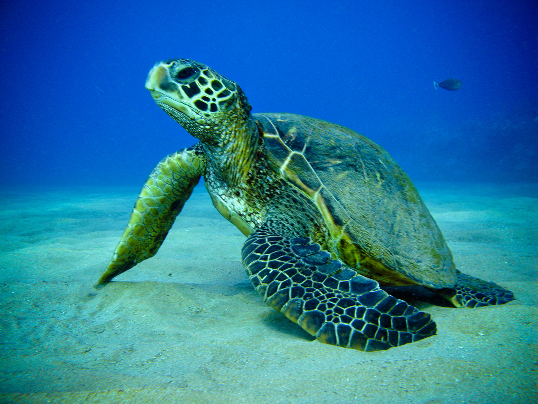 Those who read about the green turtle also liked The great Kruger 1080x810