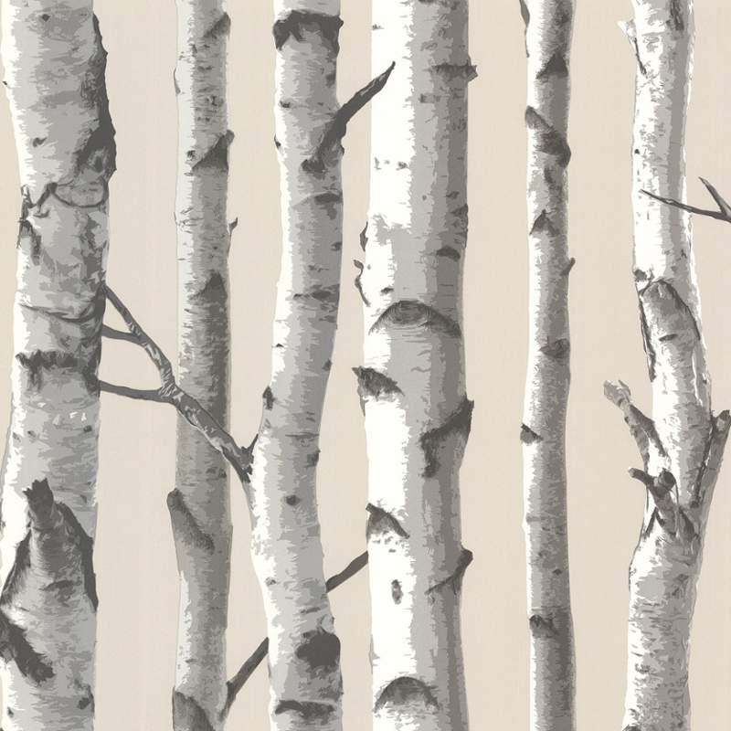 Brewster TLL21499 Tuxbury Beige Birch Tree Wallpaper Beige Birch Tree 800x800