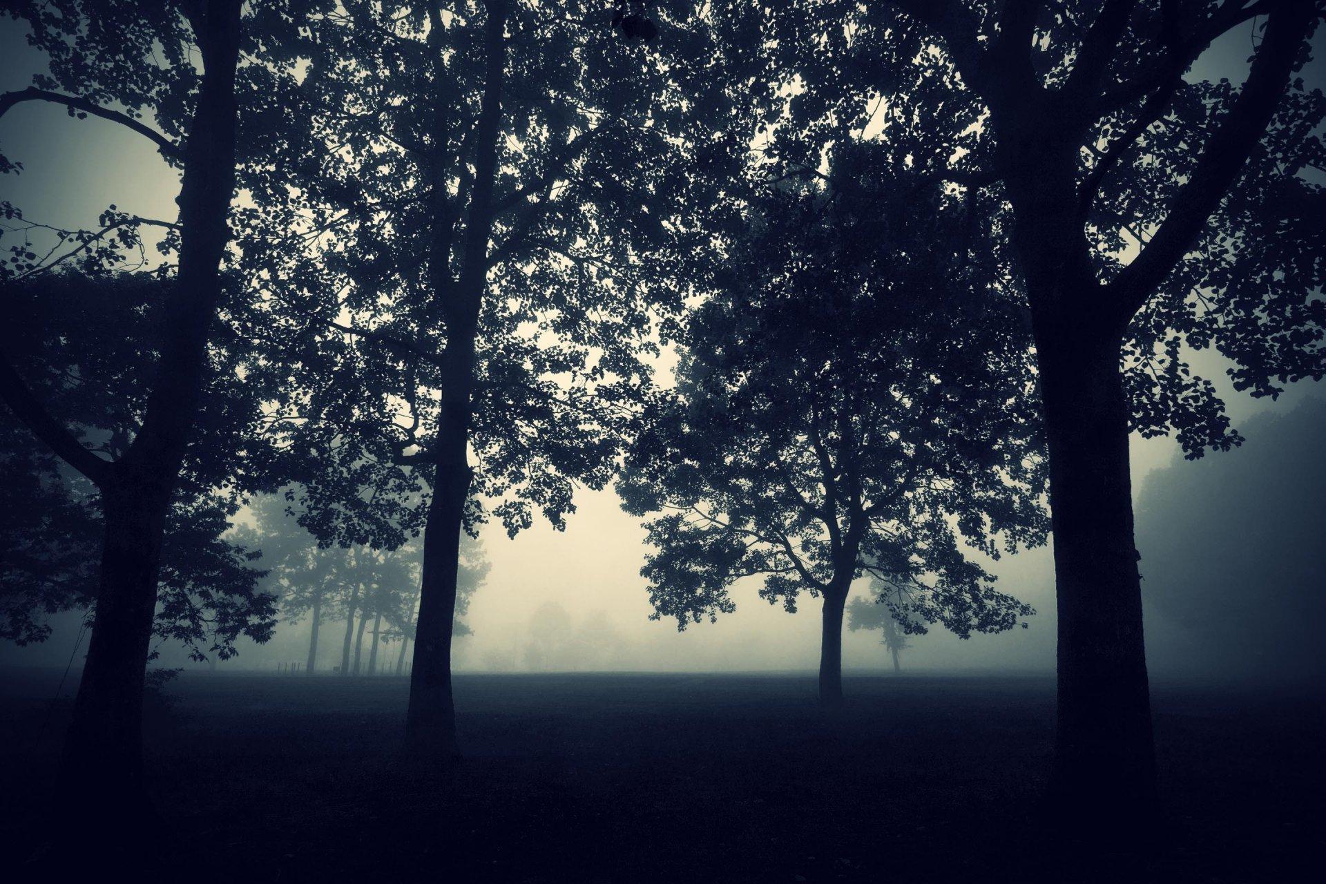 Free Download Tree Fog Darkness Night Twilight Nature Mysticism