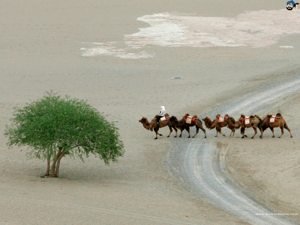 Deserts Wallpaper 28 1024x768