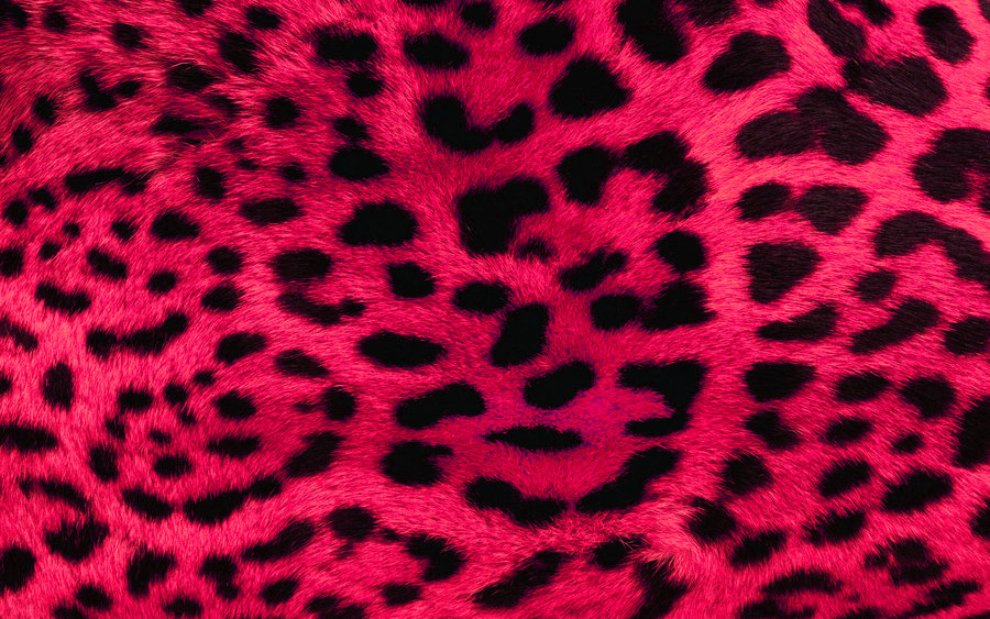 Free Download Pink Leopard Print Wallpaper By Angeldust 900x563 For Your Desktop Mobile Tablet Explore 48 Pink Zebra Wallpaper Zebra Print Desktop Wallpaper Zebra Print Wallpapers And Background Zebra