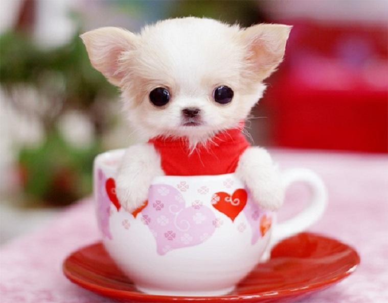 Very Cute Puppies Wallpapers Wallpapersafari