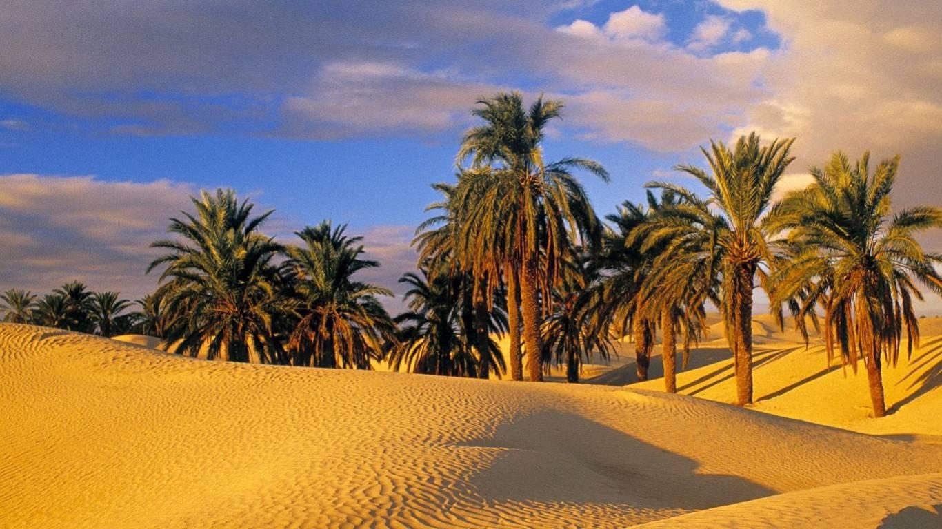 Desert Oasis 1366768 Wallpaper 2286481 1366x768