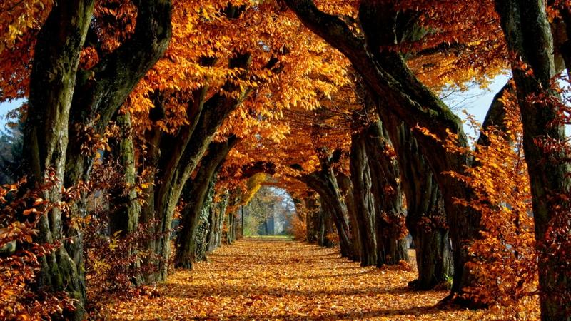 yellow leaves path brown falls end narrow start 1920x1080 wallpaper 800x450