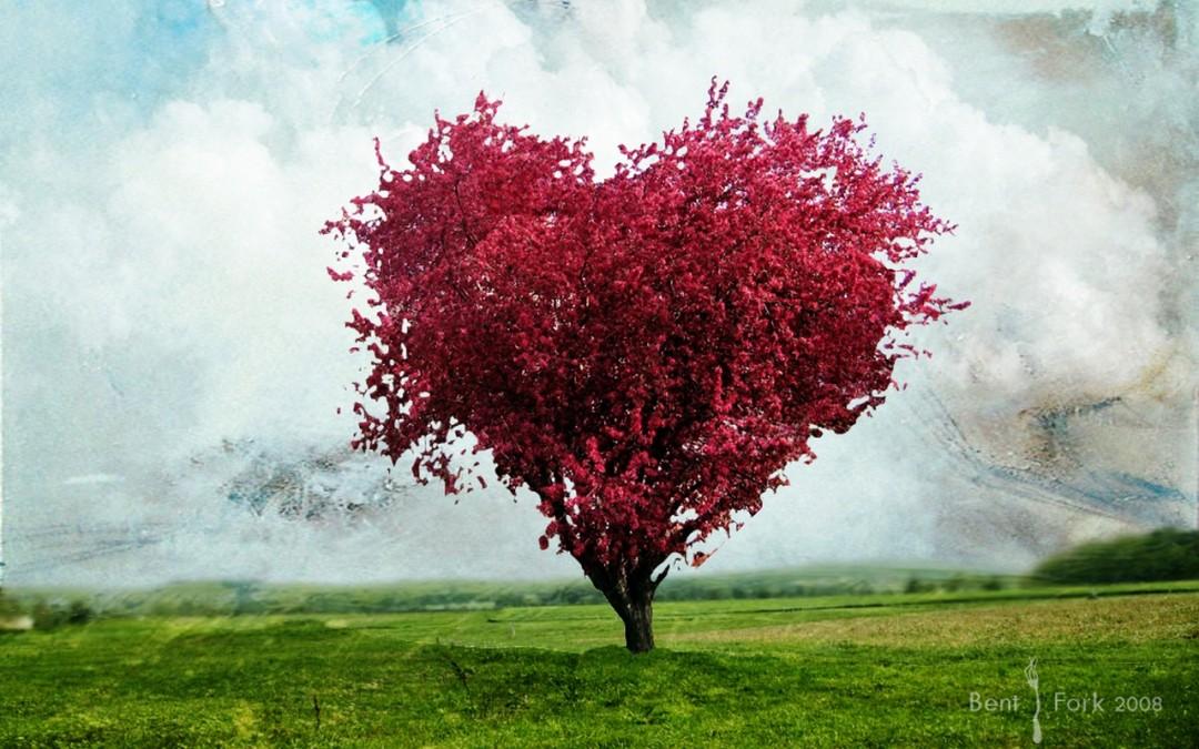 Love Tree Wallpapers HD Wallpaper HDwallpaper2013com links download 1080x675