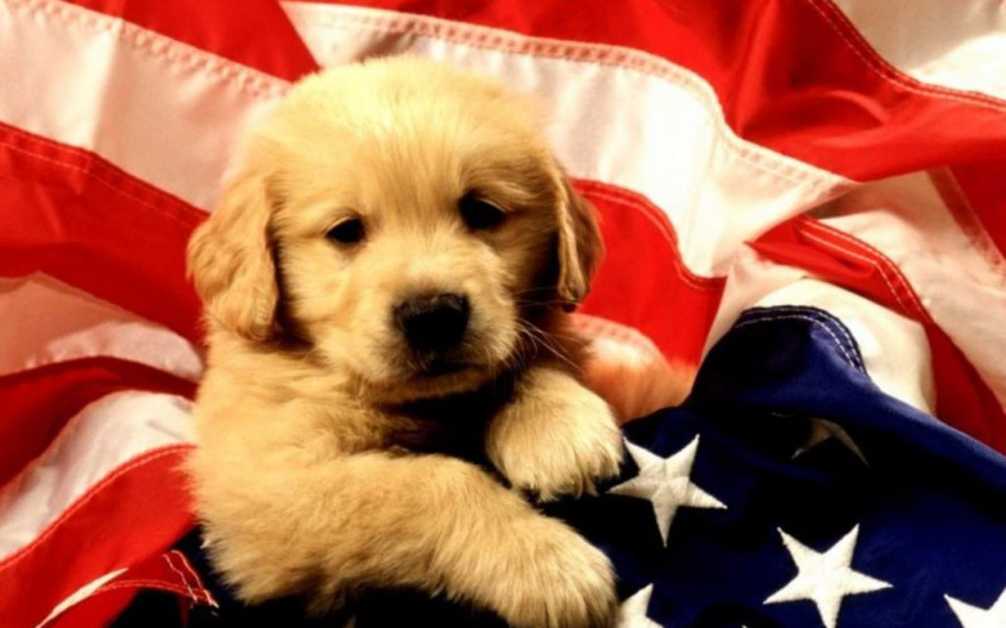 Cute HD National Dog Day Wallpapers for Celebration and Concern 1440x900