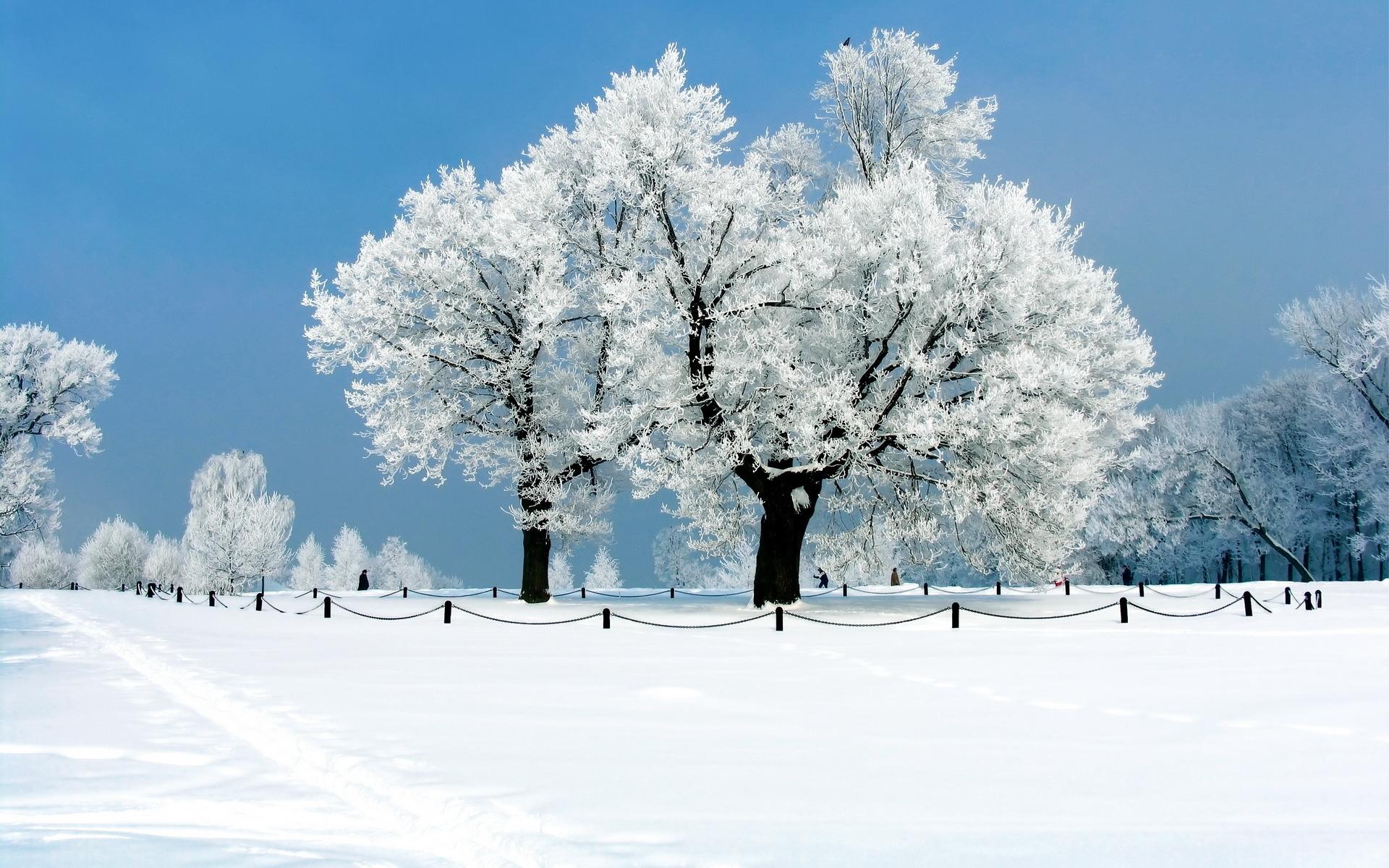 Snow covered winter nature HD Desktop Wallpaper HD Desktop Wallpaper 1920x1200