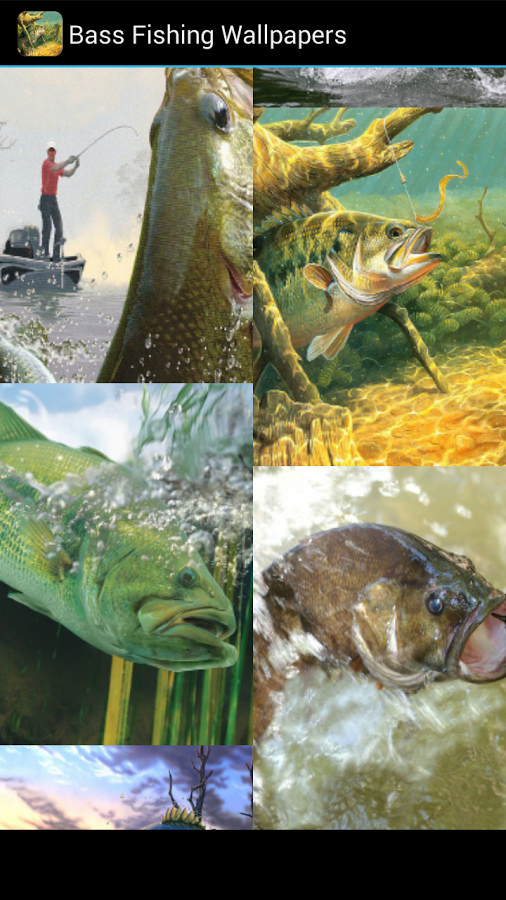 your the gone fishing type then you will love bass fishing wallpapers 506x900