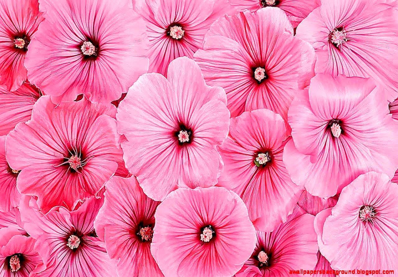 Pink Floral Wallpaper for Walls - WallpaperSafari  Pink Floral Wal...