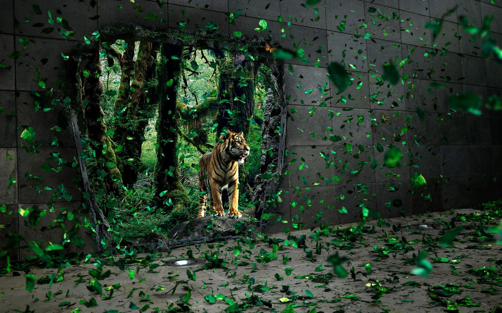 Best Desktop HD Wallpaper   Tiger HD wallpapers 1600x1000