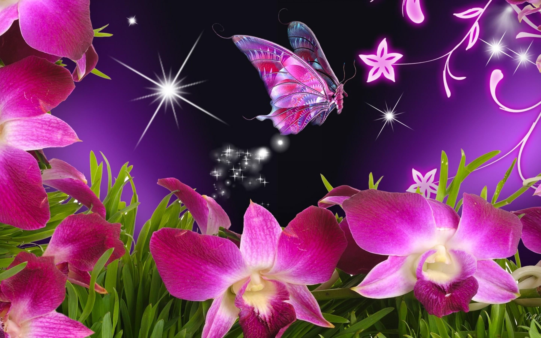 Butterfly Wallpaper HD 2880x1800