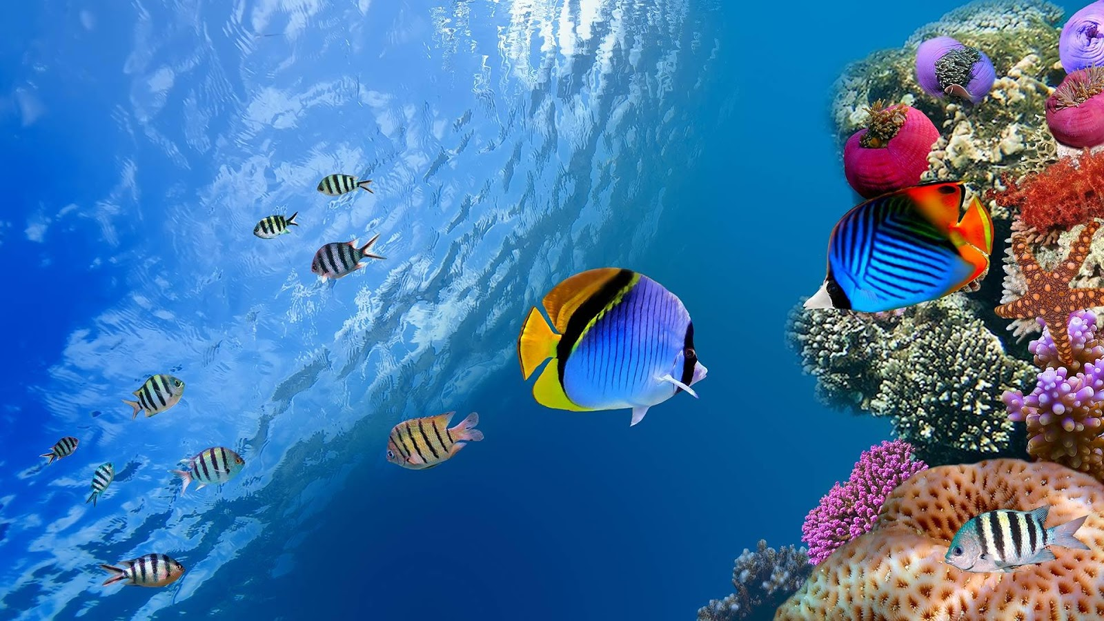Ocean Fish Live Wallpaper   Android Apps on Google Play 1600x900
