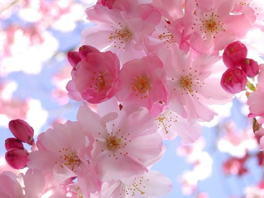 Spring Wallpaper And Screensavers HD Wallpapers Pictures HD 1024x768
