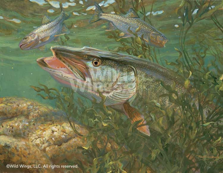 Smallmouth Bass Paintings Smallmouth bass club 750x581