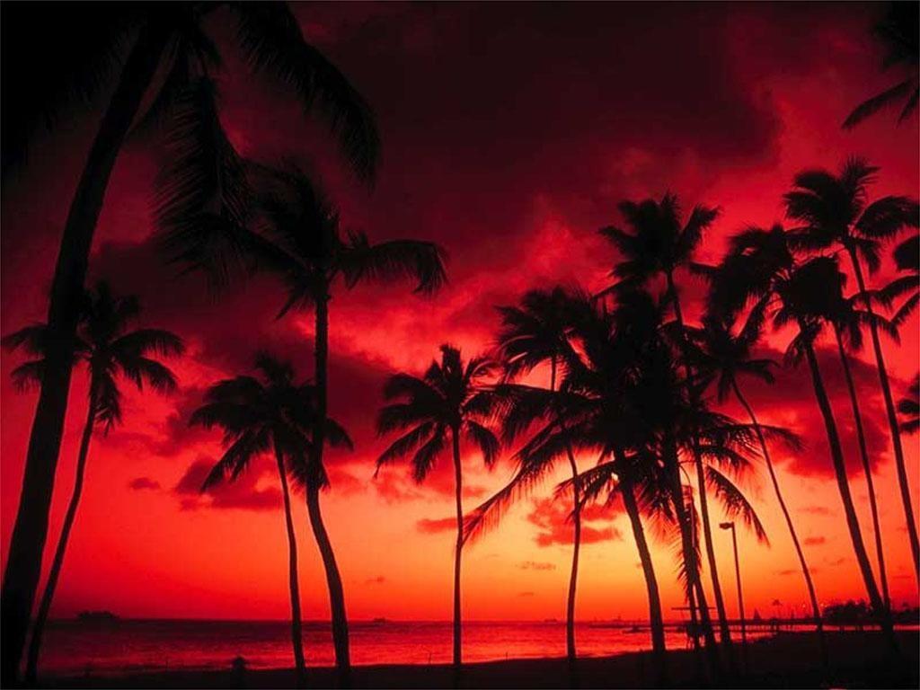 Palm Tree Sunset 1024x768