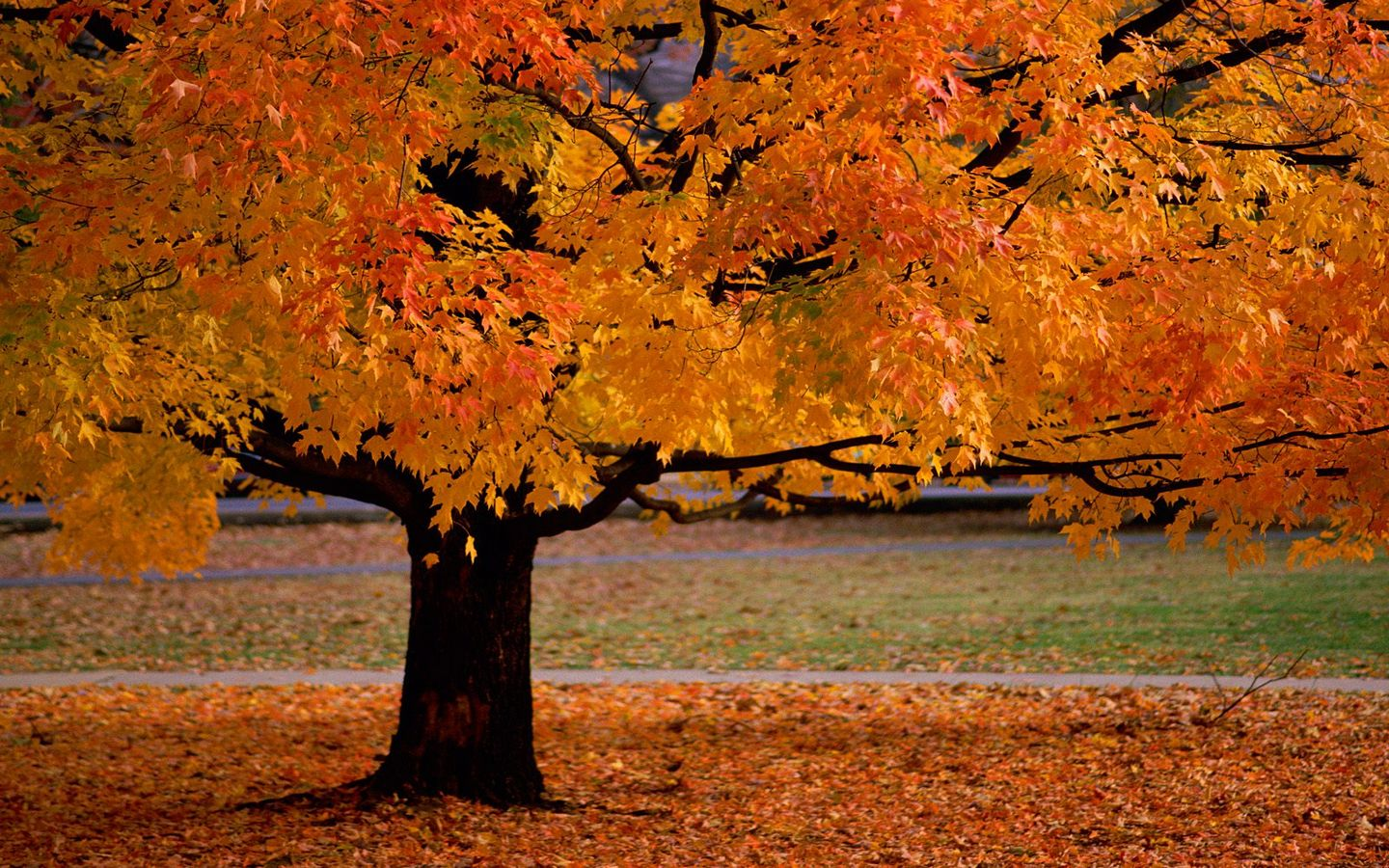 ... fall colors wallpaper displaying 12 images for fall colors wallpaper