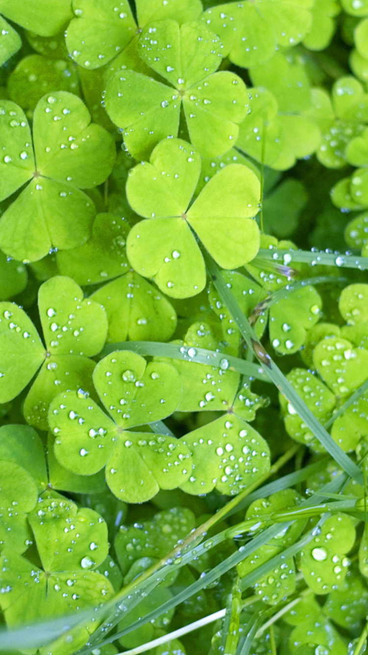 Irish Clovers iPhone 6 Wallpapers HD iPhone 6 Wallpaper 750x1334