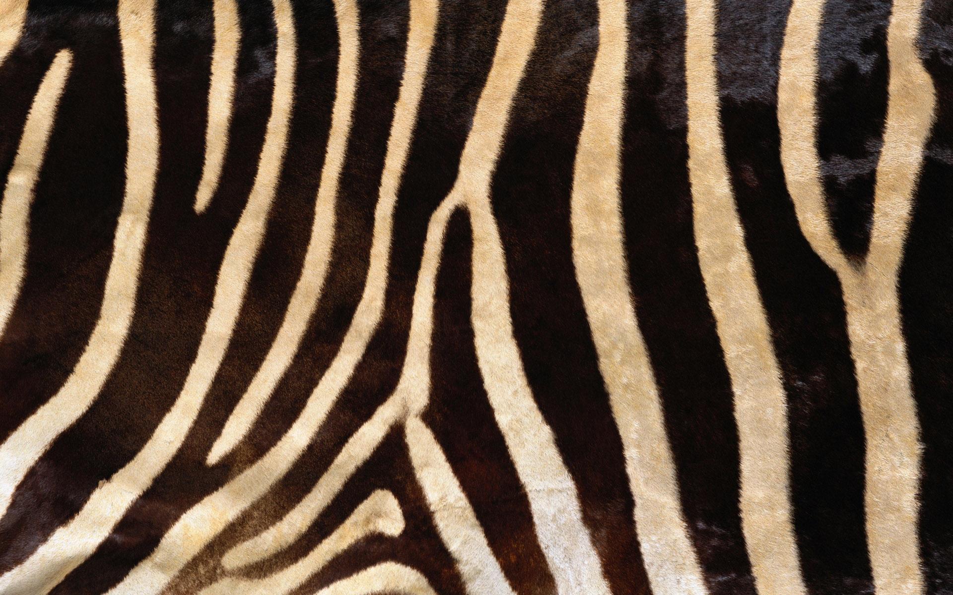 Its On Us >> Zebra Wood Wallpaper - WallpaperSafari