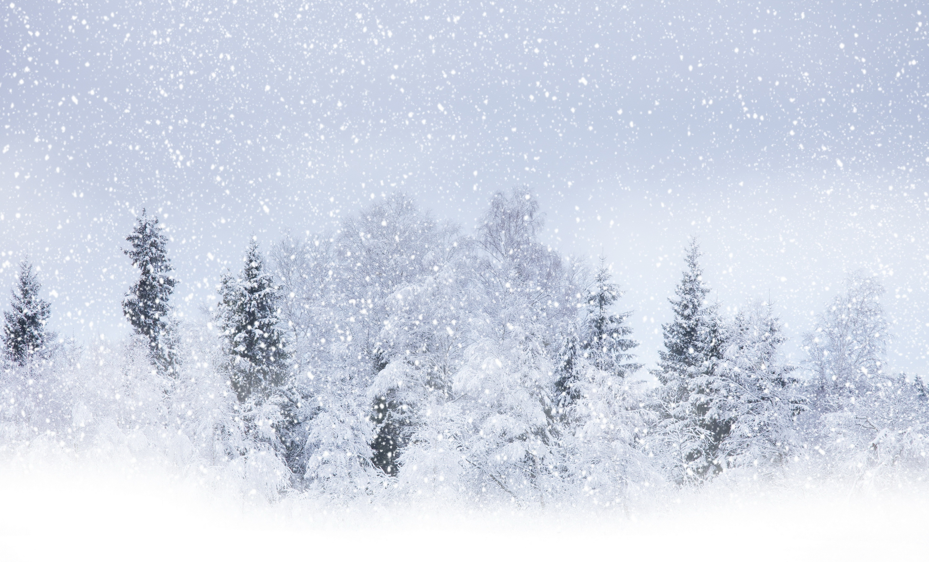 Wallpaper Winter snow tree blizzard snowstorm desktop wallpaper 3000x1816