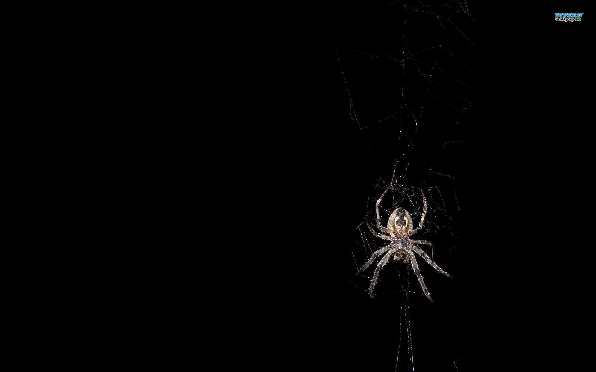 know all of you like to watch spiders on television but not real 1920x1200