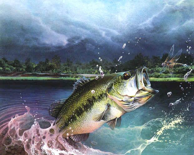 Bass Fishing Wallpaper...