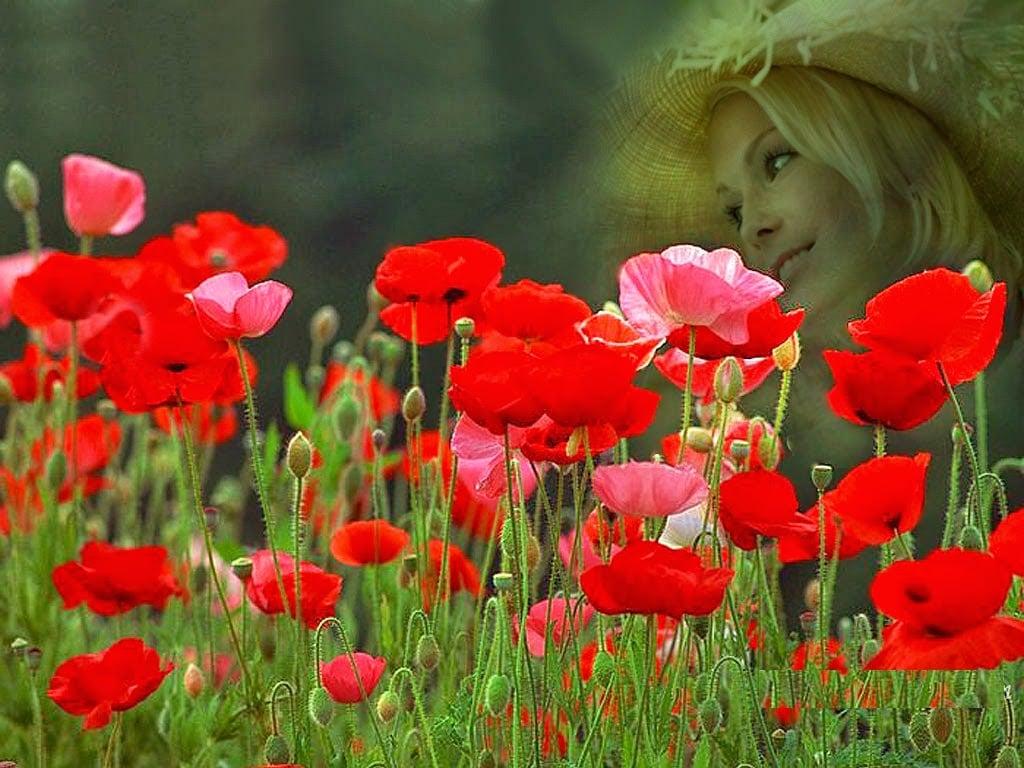 Free Download Rose Flower Garden Red Rose Flower Garden 1024x768
