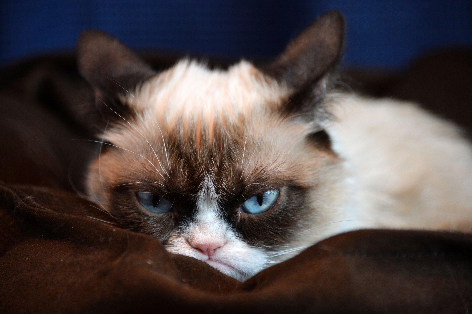 Grumpy Cat HD Desktop Wallpaper HD Desktop Wallpaper 2000x1333