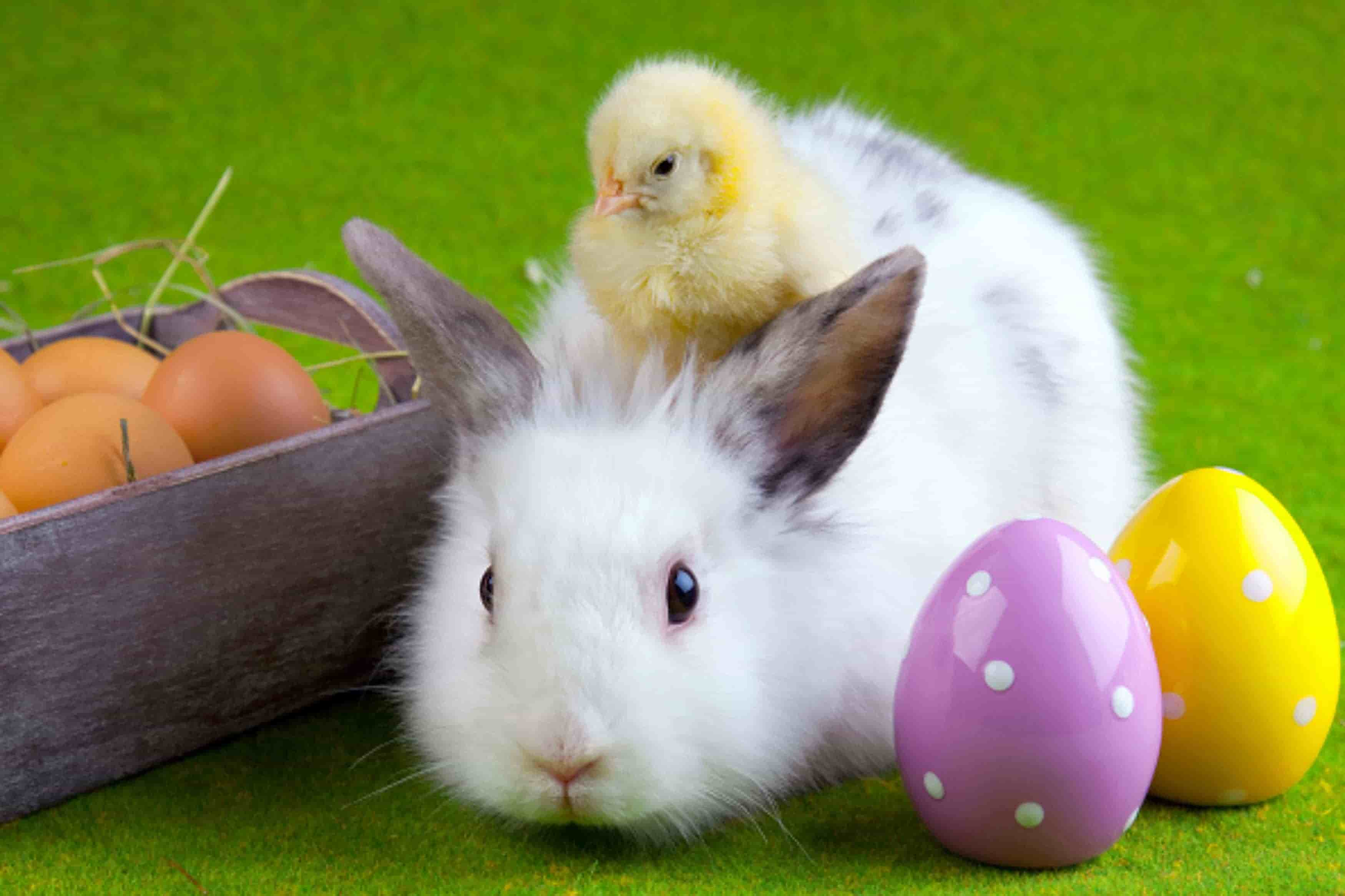 Free Download Happy Easter Bunny Hd Wallpapers 9to5animationscom
