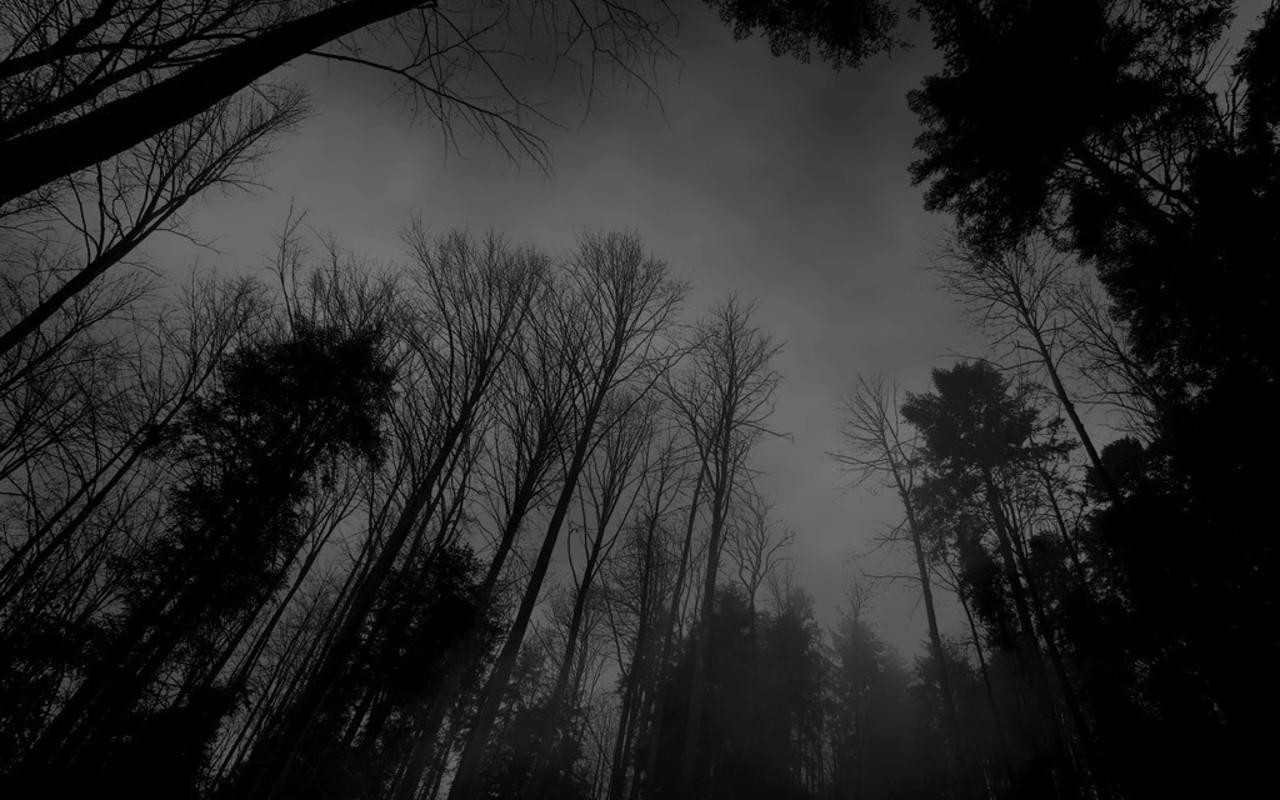 tumblr static forest black white dark forest wallpaperjpg 1280x800