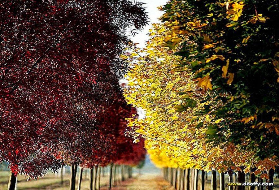 Seasonal Wallpaper And Screensavers Best HD Wallpaper 901x614