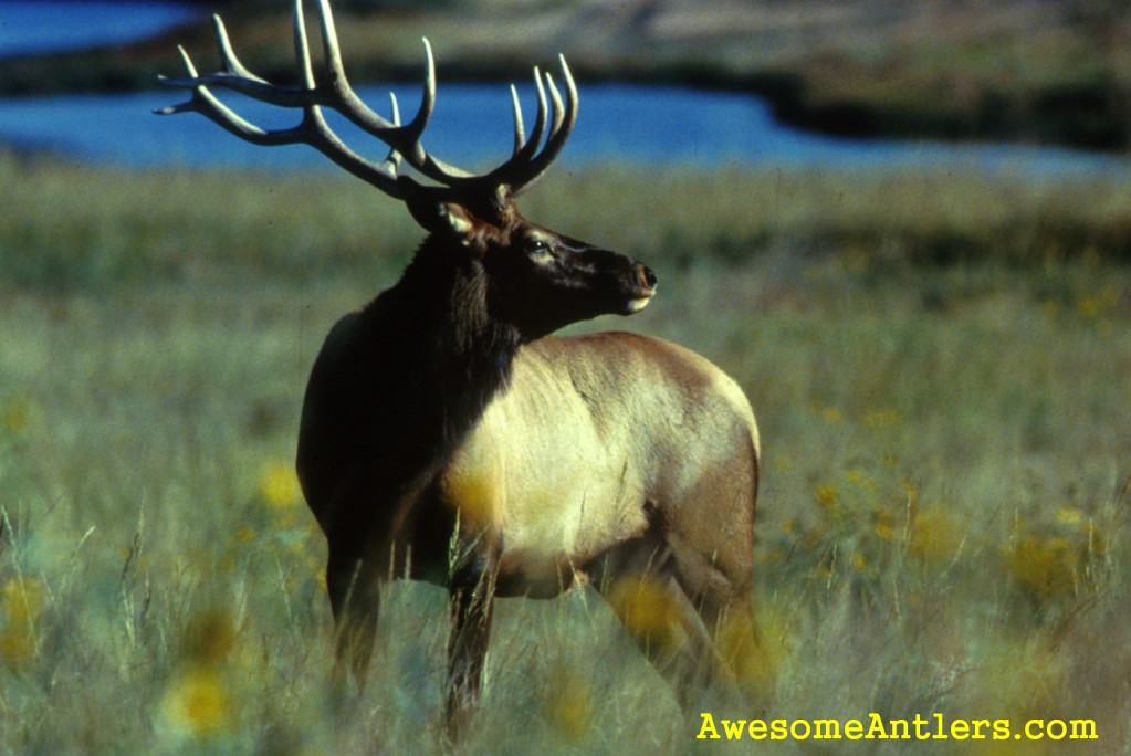 Whitetail deer and Monster Bucks Wallpapers for your PC 1023x684