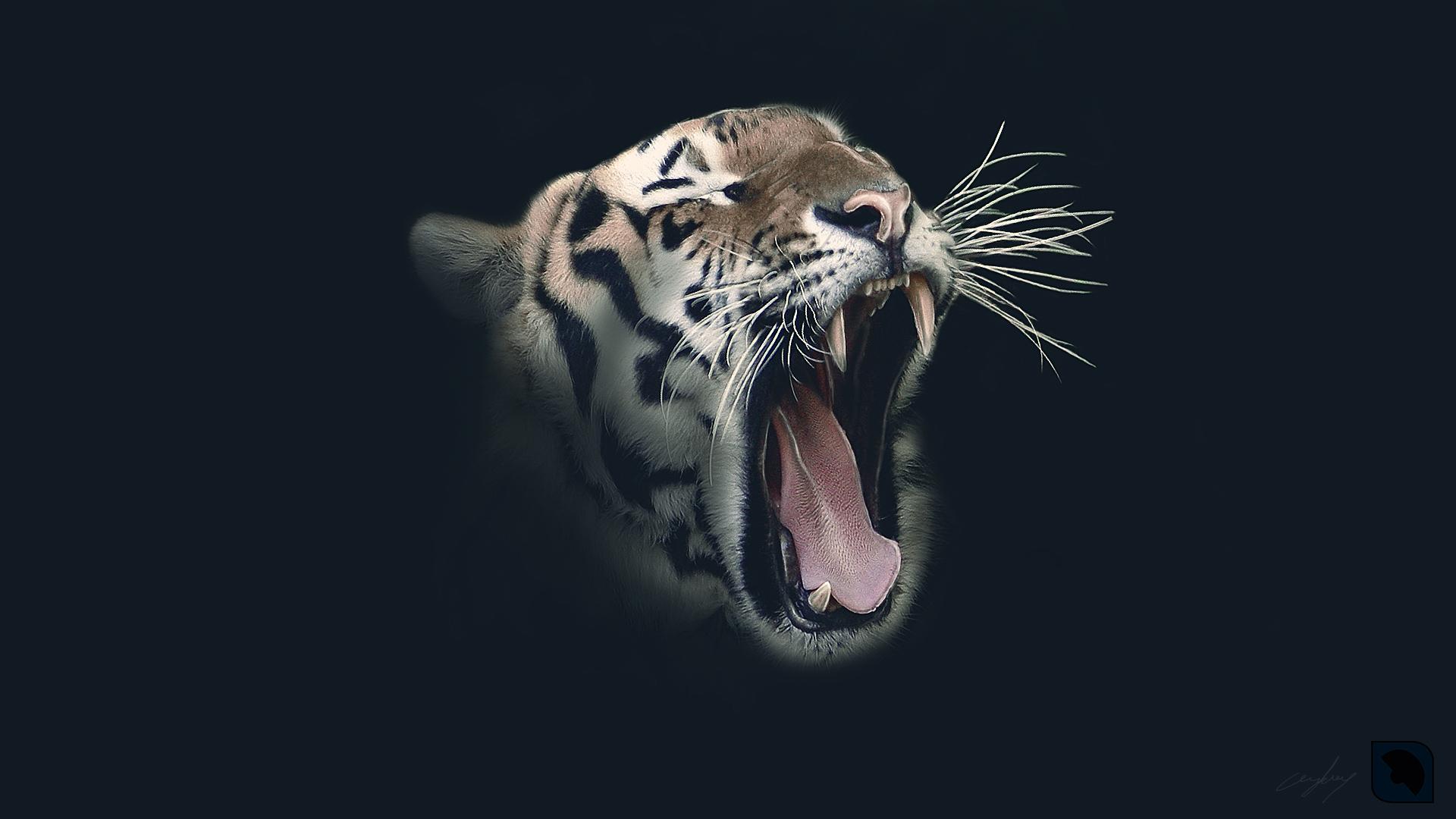 wallpaper tiger ceykey art deviantart 1920x1080