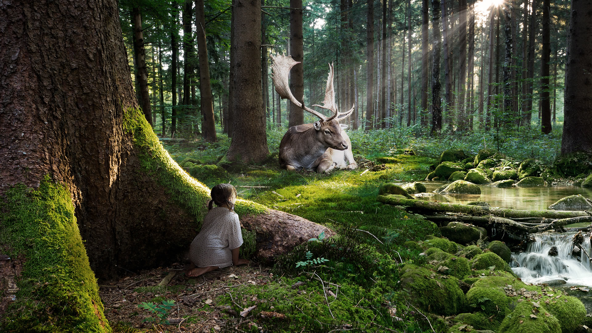 group of hd 1080p wallpaper of forest home