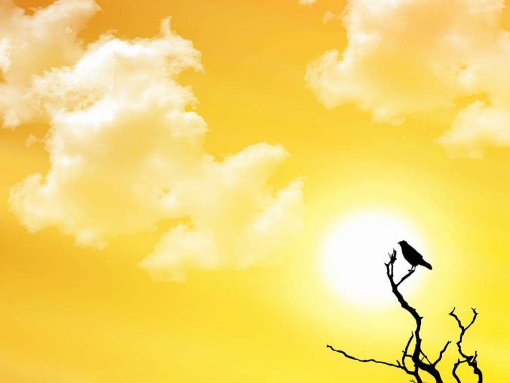 [40+] Bright Sunny Day...
