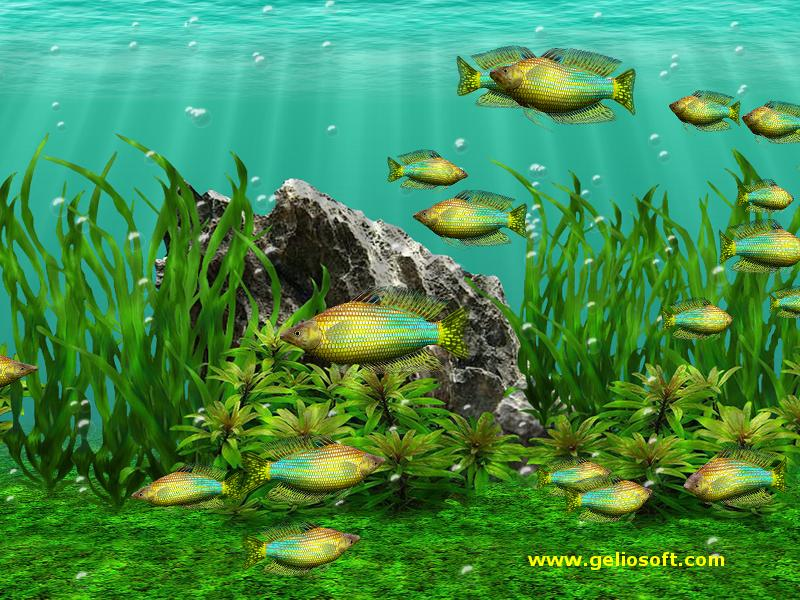 Moving Fish Wallpapers Free Moving Aqu...