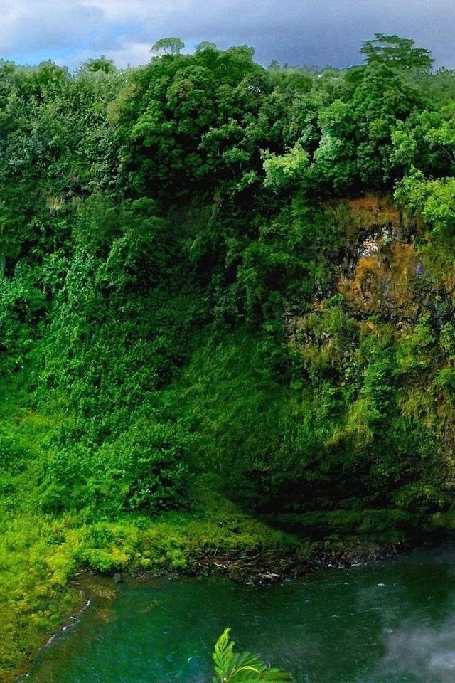 Beautiful Green Forest iPhone HD Wallpaper iPhone HD Wallpaper 640x960
