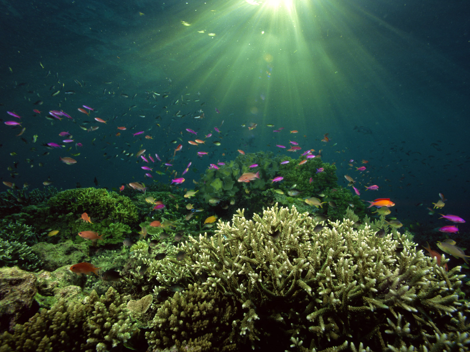 Underwater desktop backgrounds wallpapersafari - Desktop wallpaper 1600x1200 ...