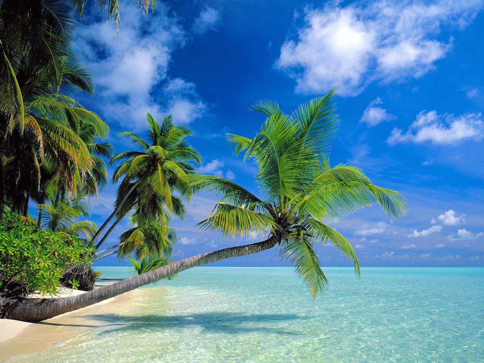 Beautiful Beach   Wallpaper 11010 1600x1200